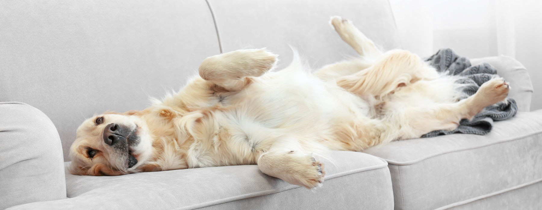 Dog sleeping on a couch